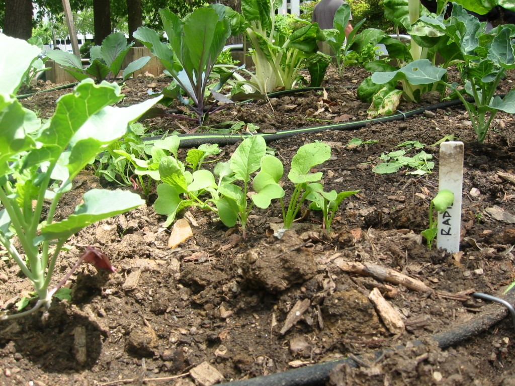 The Third Place Mro Garden Blooms Again