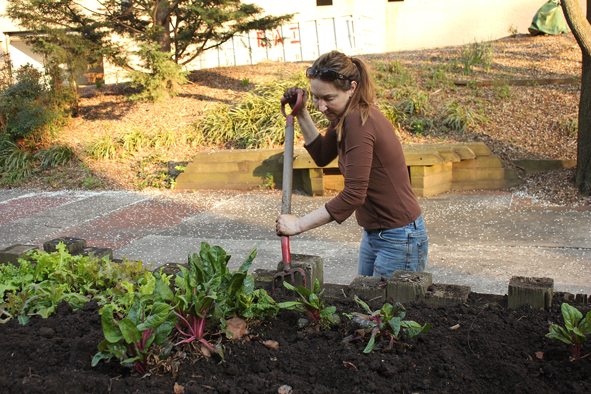 Staff members cultivate a community vegetable garden at the Planning Department in Silver Spring.