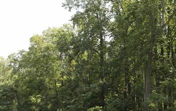 MDR_Forest_Banks_2015