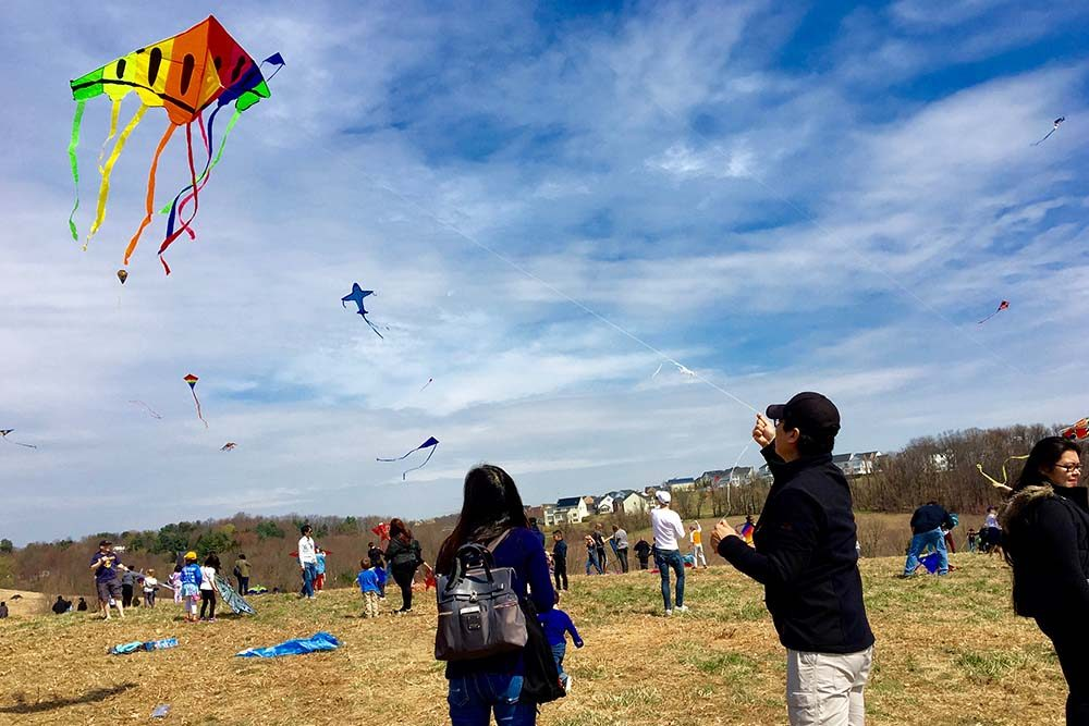 people flying kites in a field