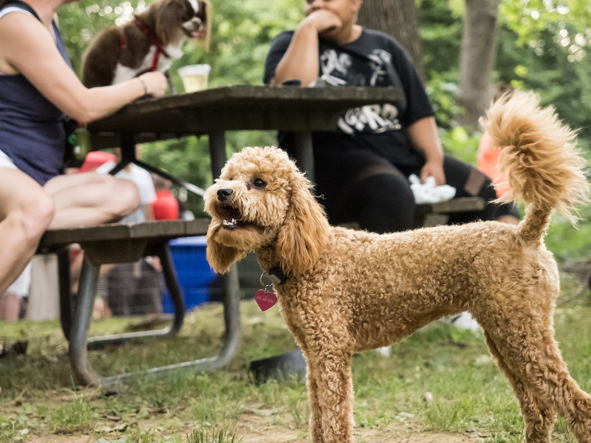 Dog in foreground, two people and a dog at picnic table in background