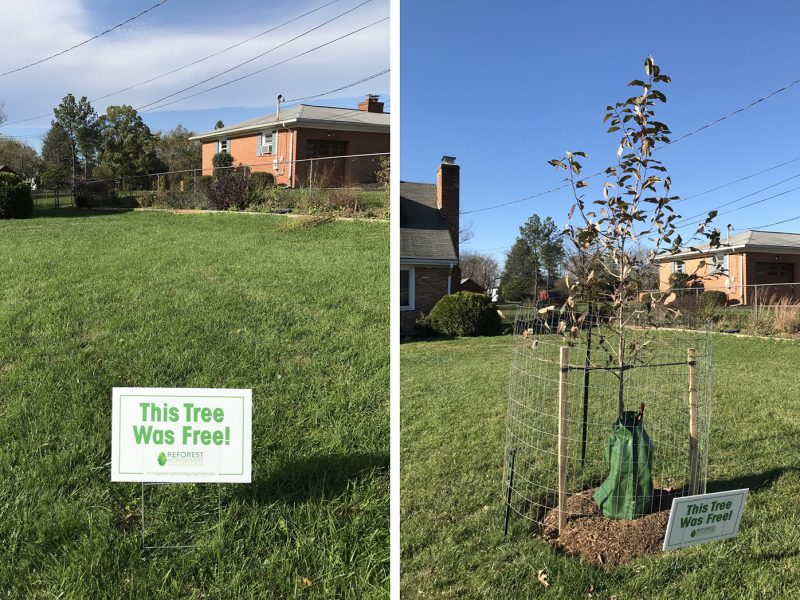 Before and after photos showing shade tree growth