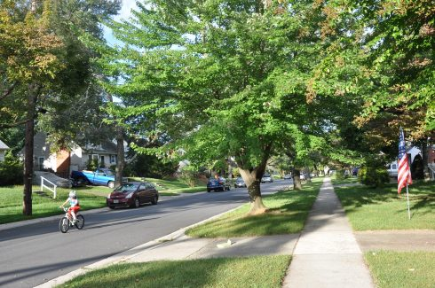 a road and sidewalk under a tree